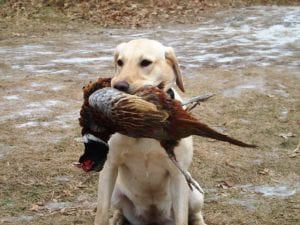hunting-dog-big-catch